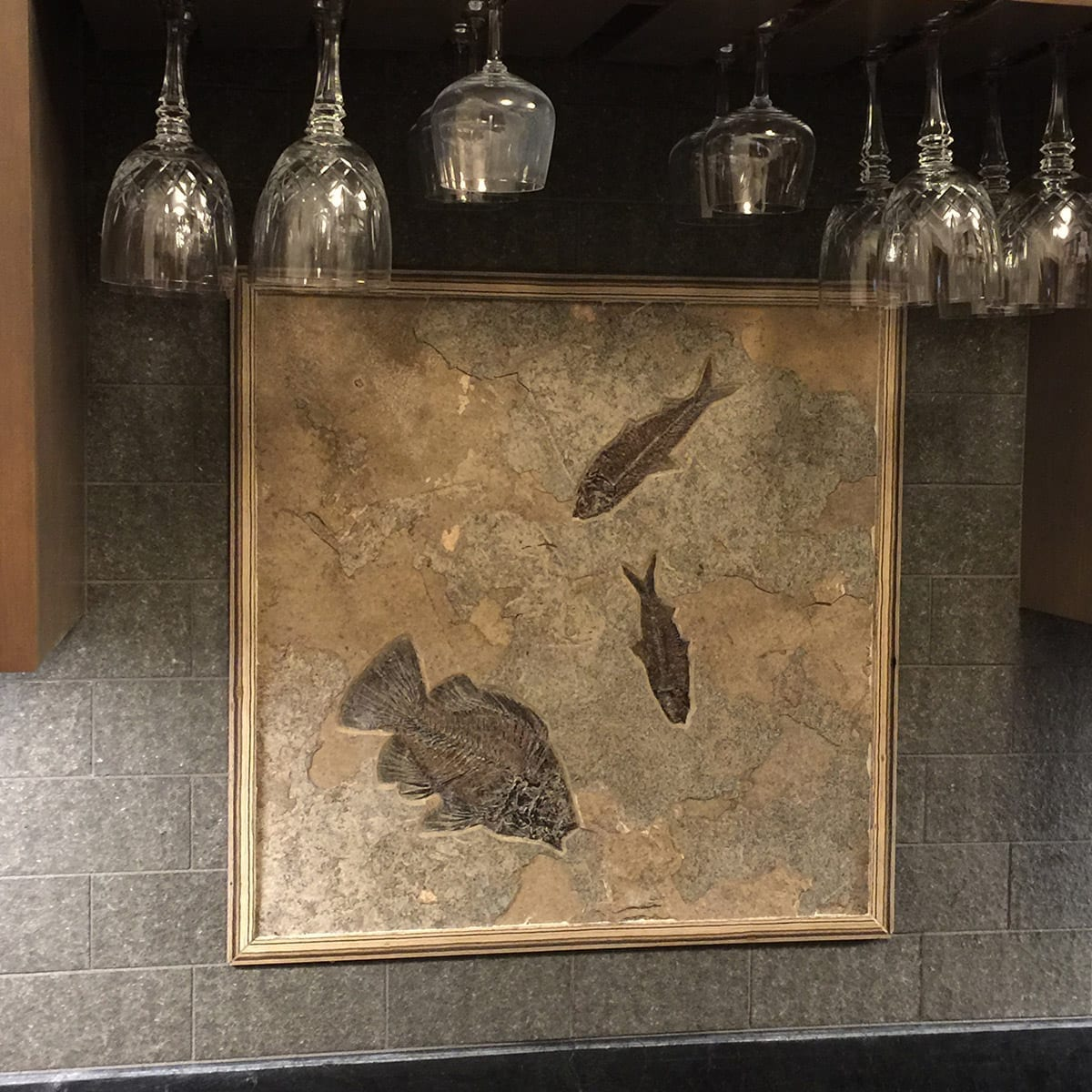 Prehistoric Fossil Tile Accent Behind A Bar